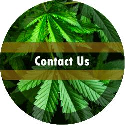 Contact Cloud13rx